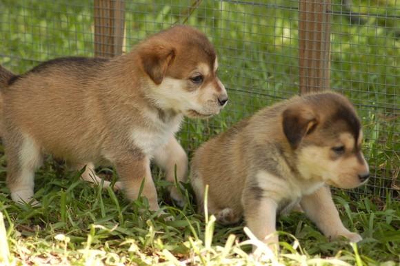 Puppies 198.jpg